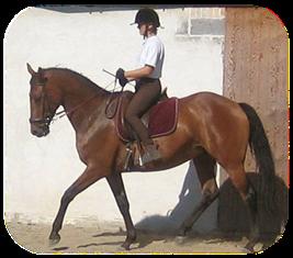 allergi overfor heste