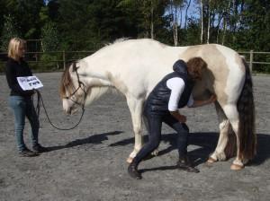 Billedet her er taget på et Equine Touch kursus, og viser hvordan eleverne øver sig på Equine Touch i praksis.
