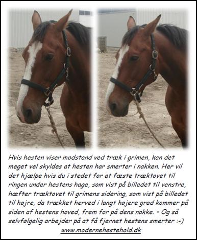 nakkesmerter-hest